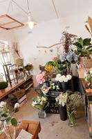 Moss-Nest-florist