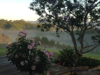 Mist through the roses at Berry's Back2Earth Farmstay