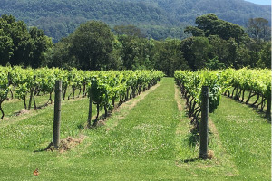 winery-tours-berry-south-coast